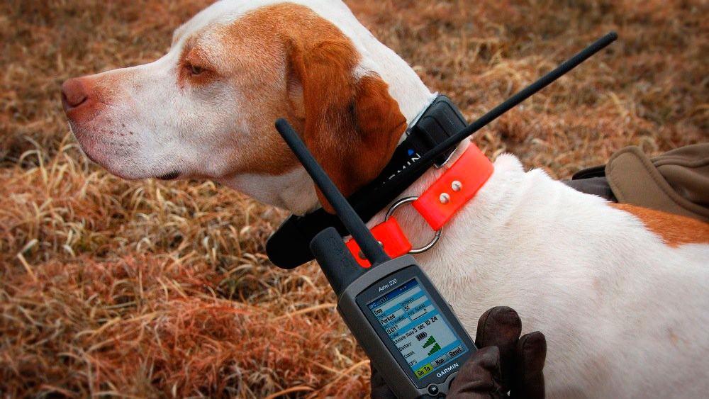 Ошейники для собак с навигатором